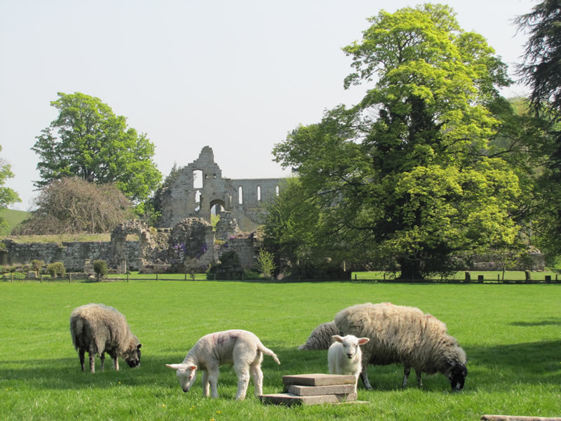 Jervaulx Abbey by Tripadvisor.com