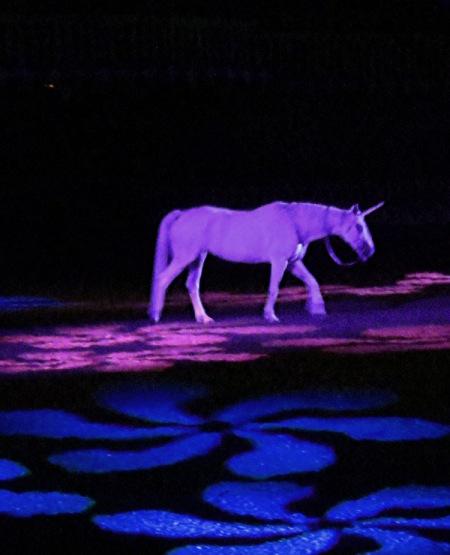 Princess Amirah's unicorn photo by Christa Thompson
