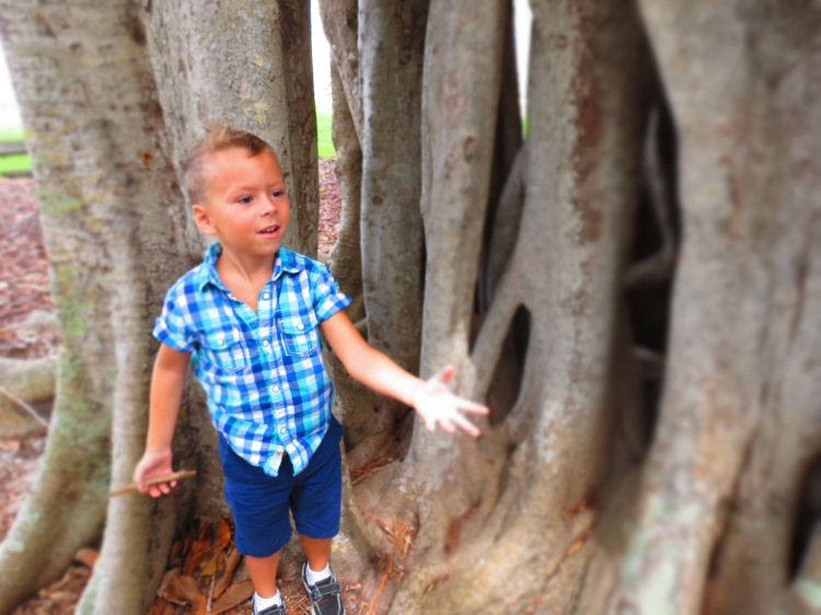 My son can't get enough of this banyan tree in Sarasota, Florida photo by Christa Thompson 2013