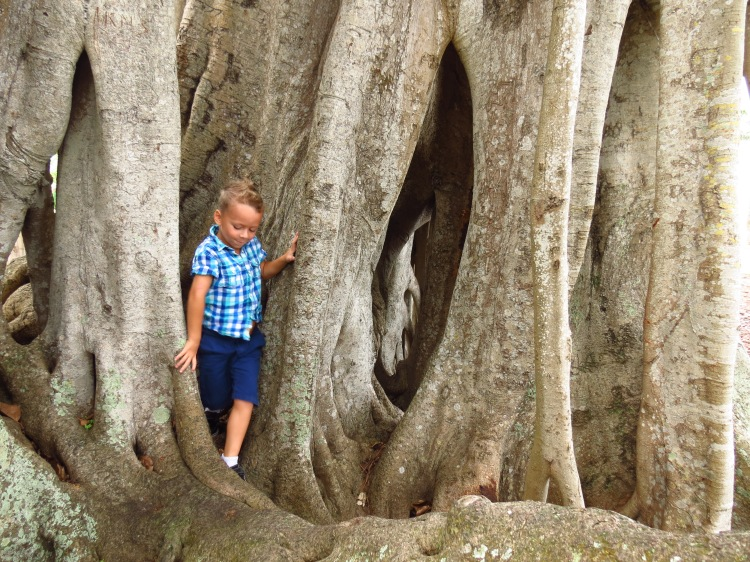 My son horsing around a banyan tree in Sarasota, Florida photo by Christa Thompson 2013